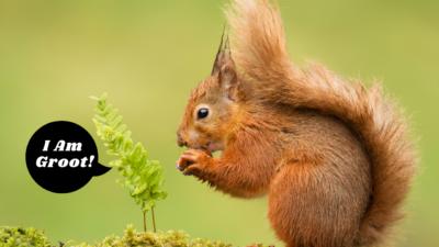 Red Squirrel Quiz