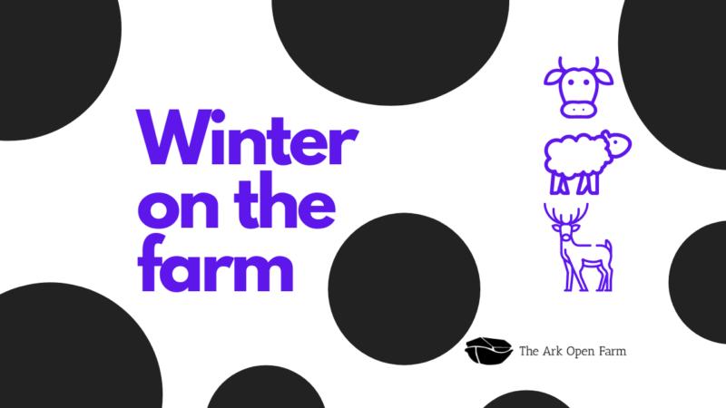 Winter On The Farm 1