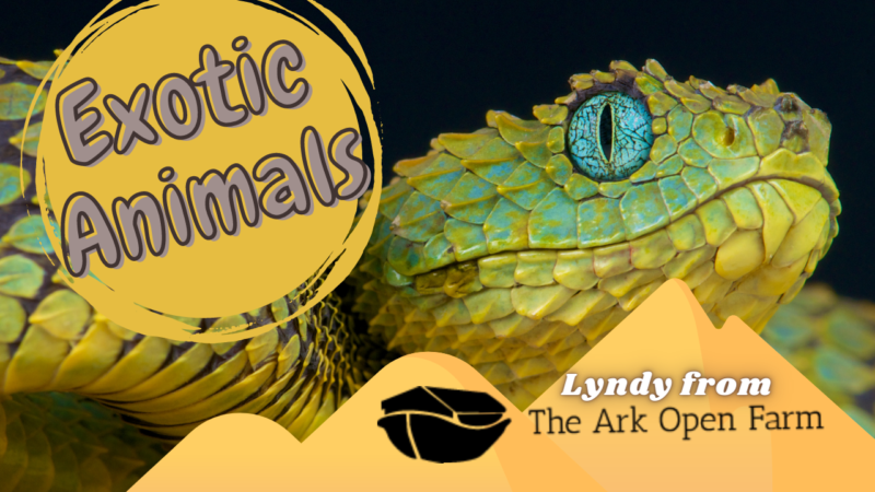 Exotic animals thumbnail 4